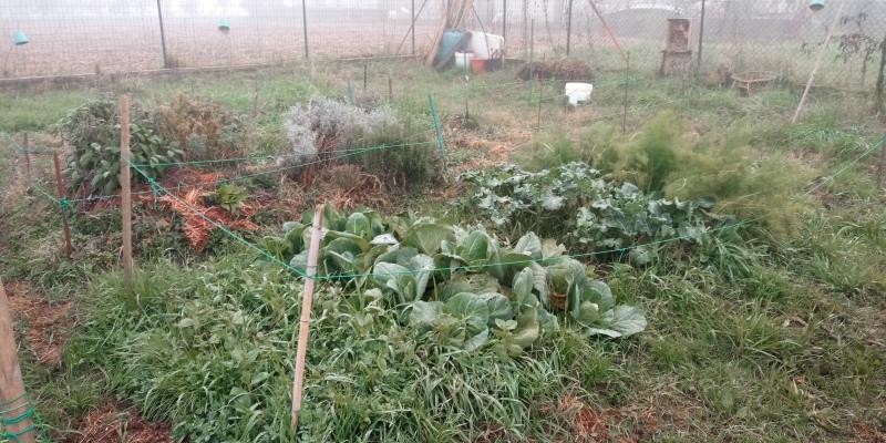 orto in inverno