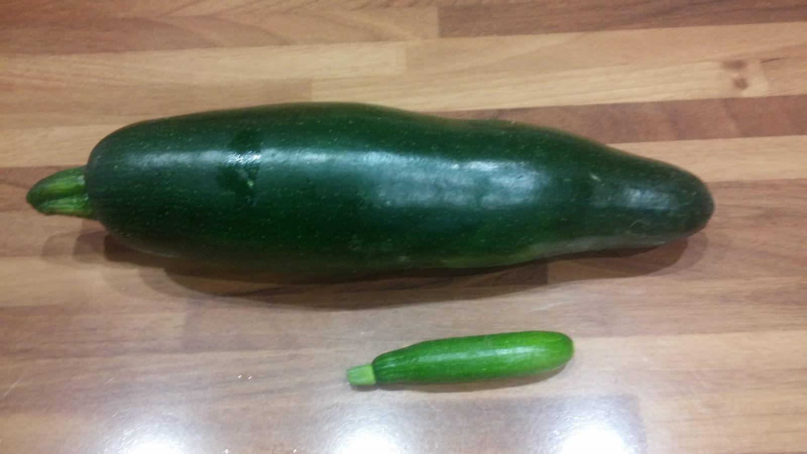 zucchina gigante