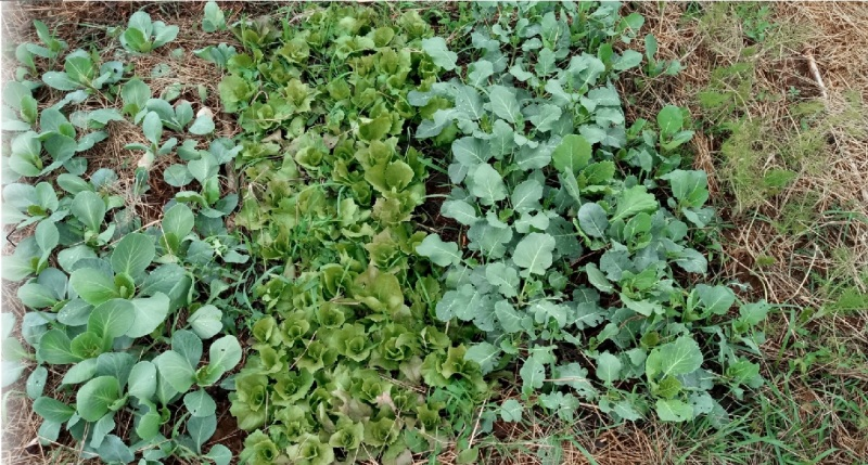 colture invernali bio