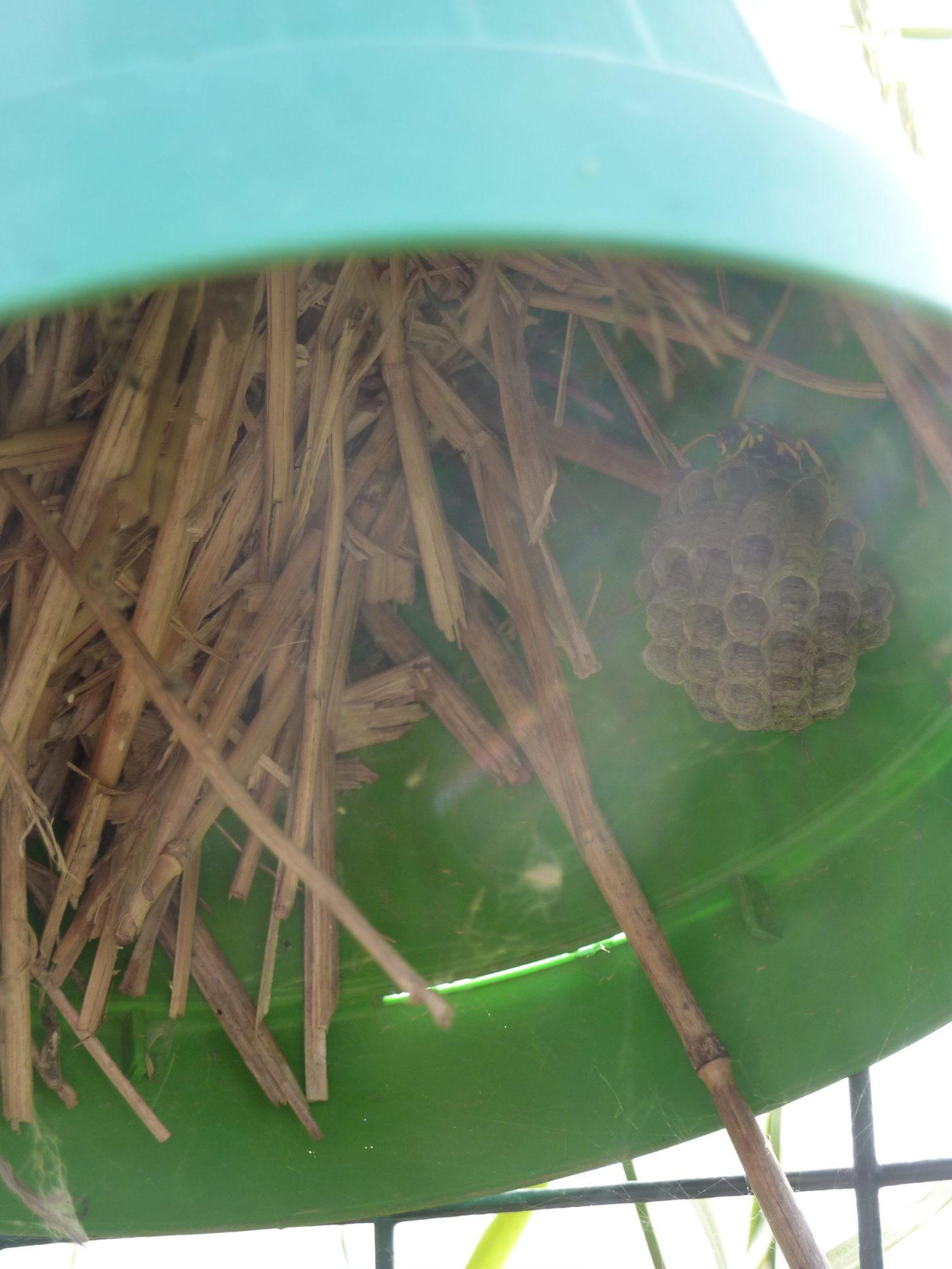 nido di vespa