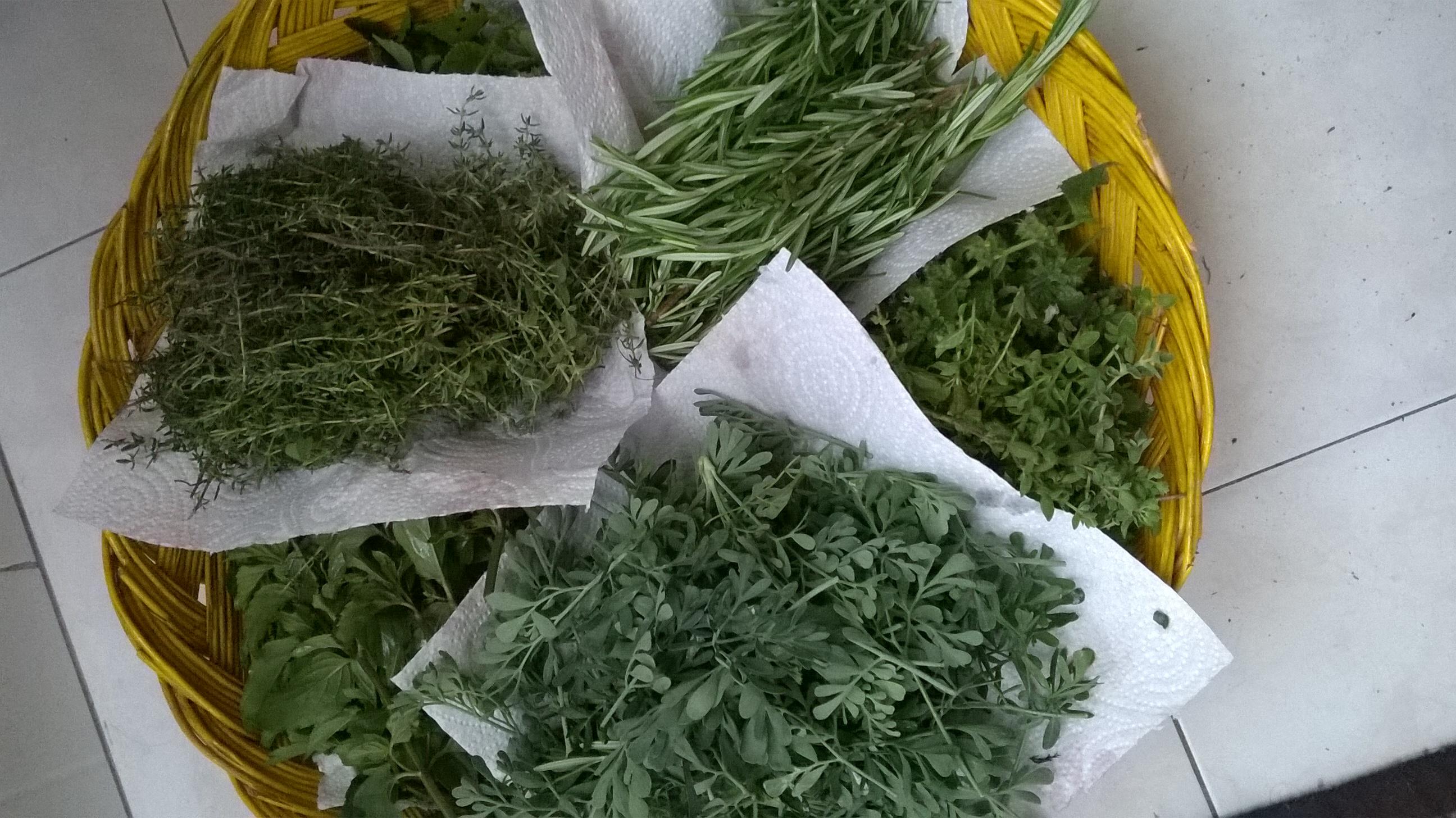 raccolta erbe aromatiche bio