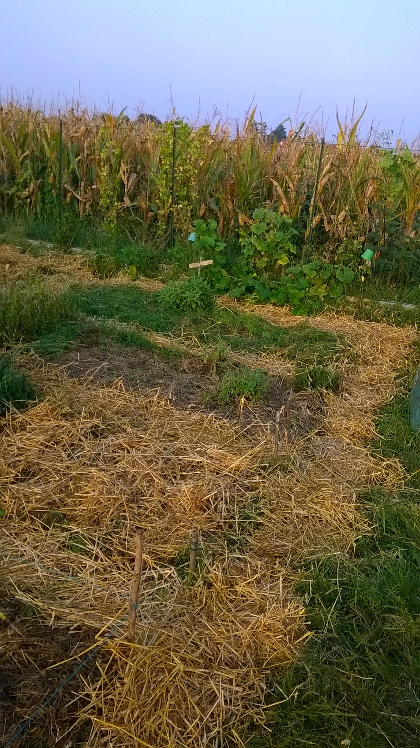 orto bio autunno