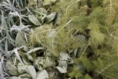 vegetali bio in inverno