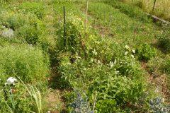 orto bio coltivazione