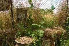 case degli insetti