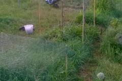 orto biointensivo