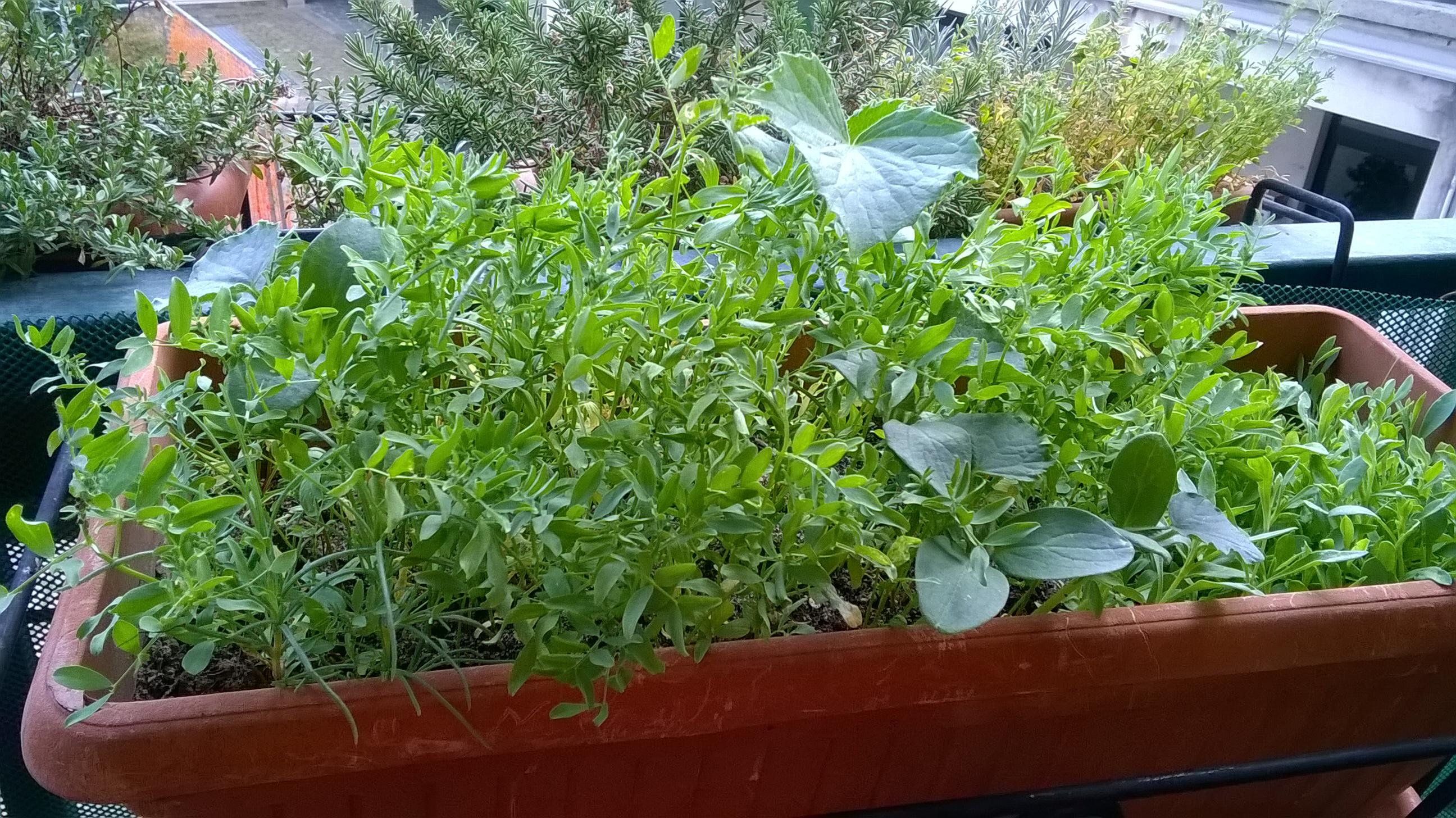 Piante aromatiche bio balcone