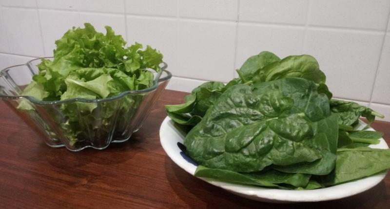Spinaci-ed-insalata-coltivate-in-balcone