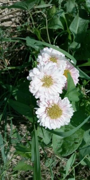 fiori bio