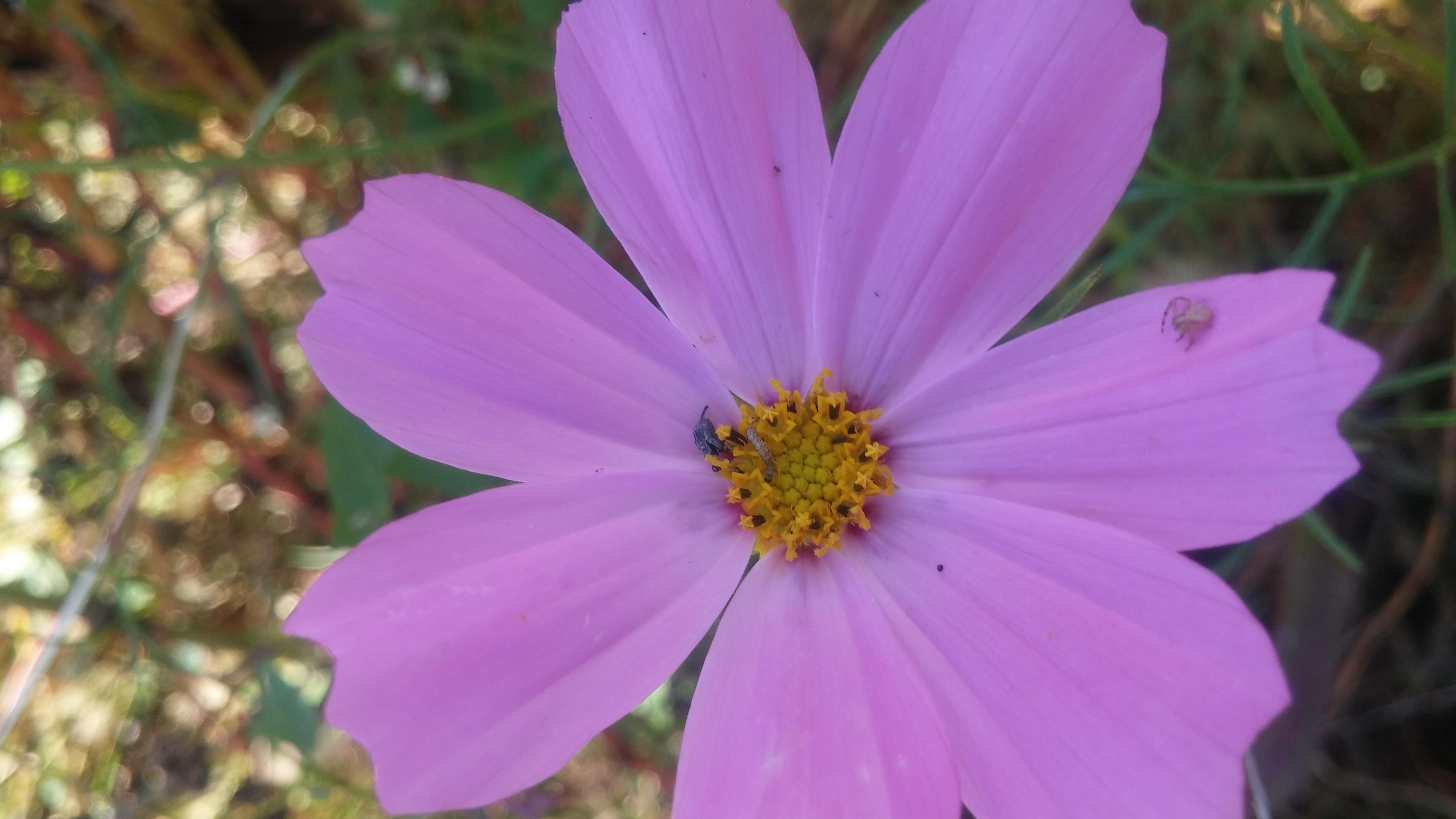fiore con insetti