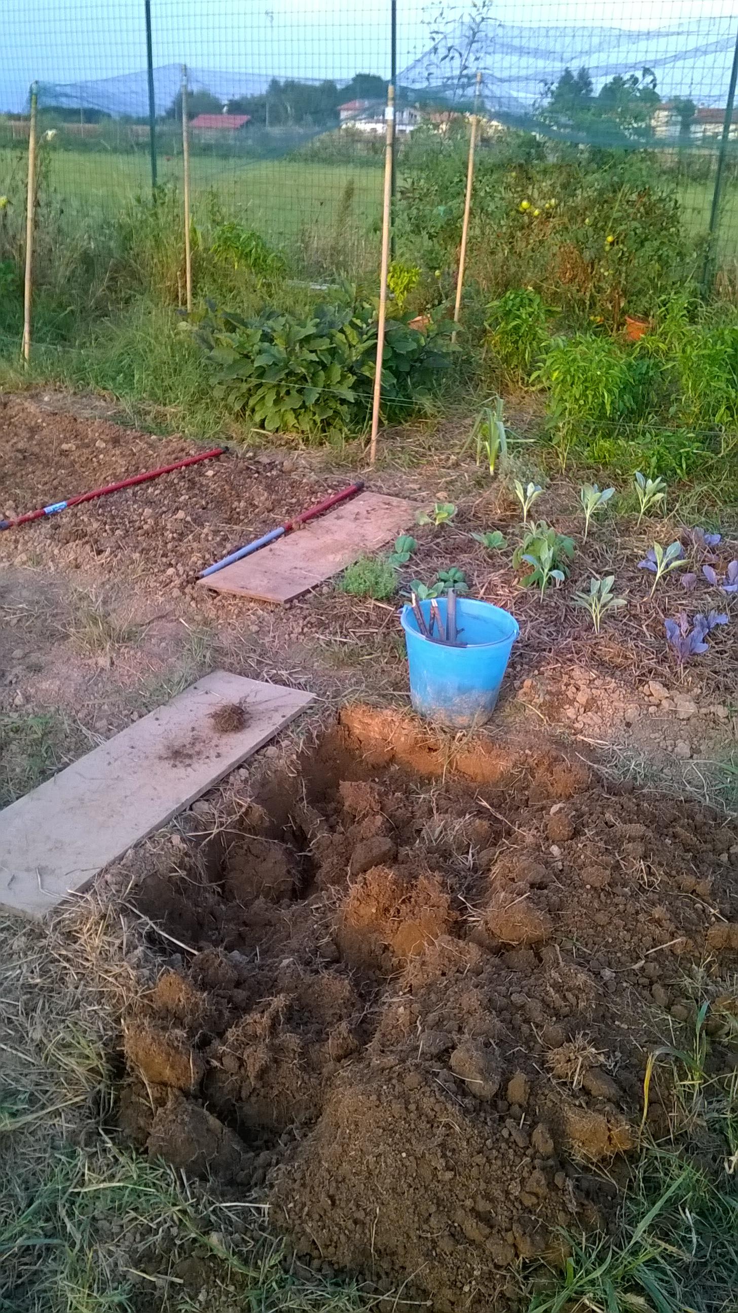 trapianto semina orto bio