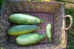 Zucchine Cestino