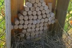casetta api solitarie bombi calabroni